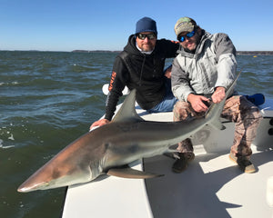 Hil Head Shark Fishing with Off The Hook Fishing Charters