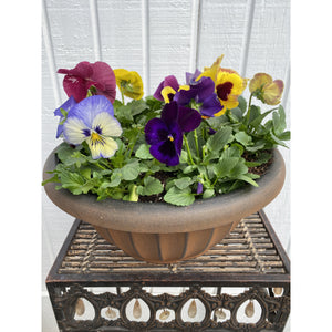 "Pansy Bowl 11"" All Colors Blend"