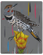 """Northern Flicker and Opuntia Bloom"""