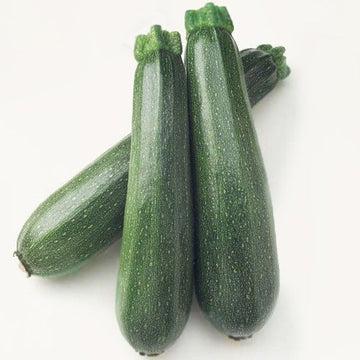 Medium Green Zucchini Approx. 20 Lbs