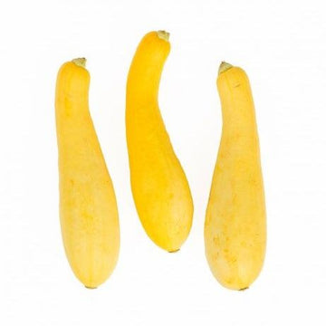 24 Lbs Medium Yellow Squash