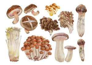 Set of different types of mushrooms