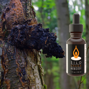 Chaga Extract and mushroom product.