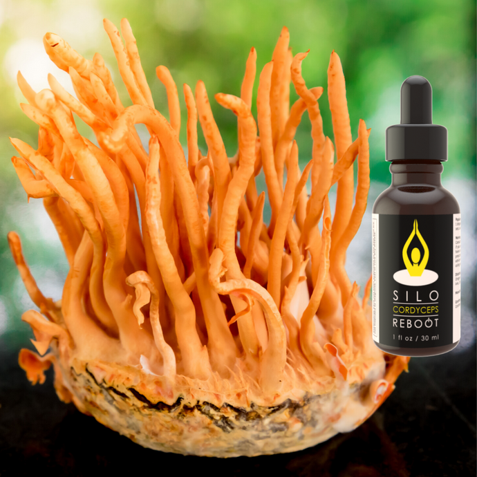 Cordyceps Extract and mushroom product.