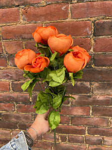 Orange Cabbage Rose