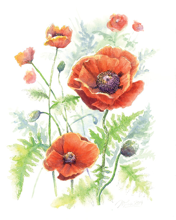 Poppies, Limited Edition Print