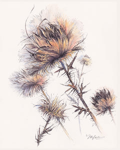Sunset Thistle, Limited Edition Print