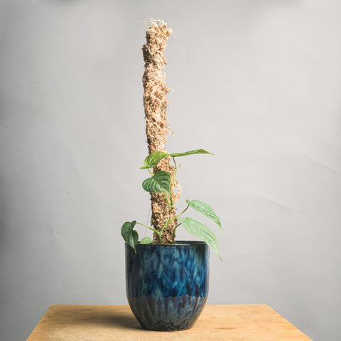 Rustic Branch Moss Pole
