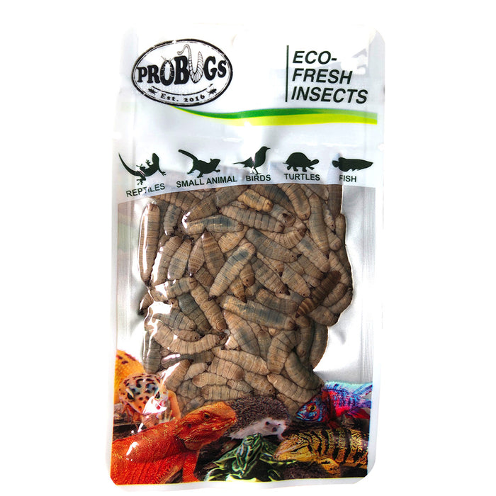 DUBIA ROACHES SINGLE PACK