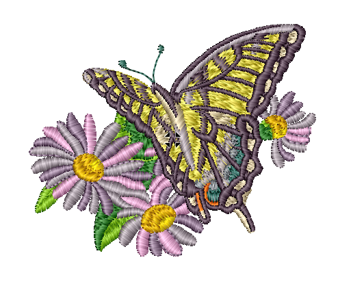 Deep Purple and Yellow Butterfly on Lavender Flowers