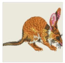 Greater Bilby Australian Embroidered Patch - EH Patches