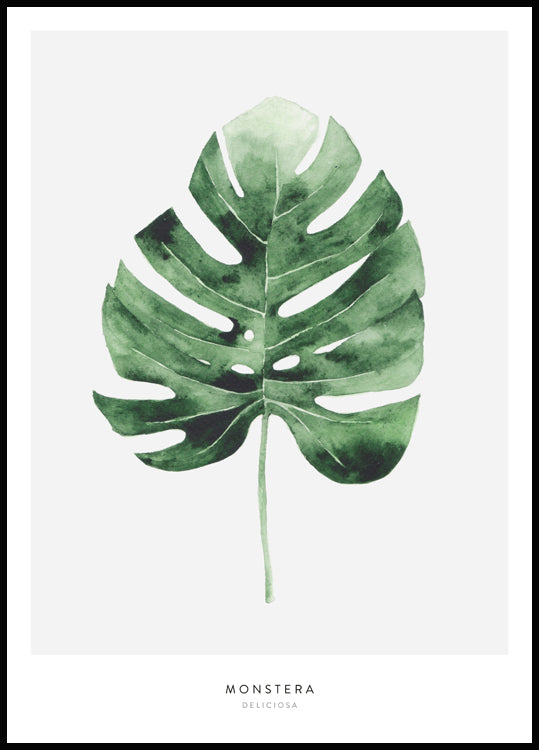 Monstrera Leaf poster