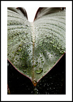 Leaf Droplets