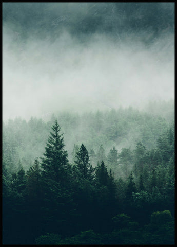 Tree Top Fog Poster