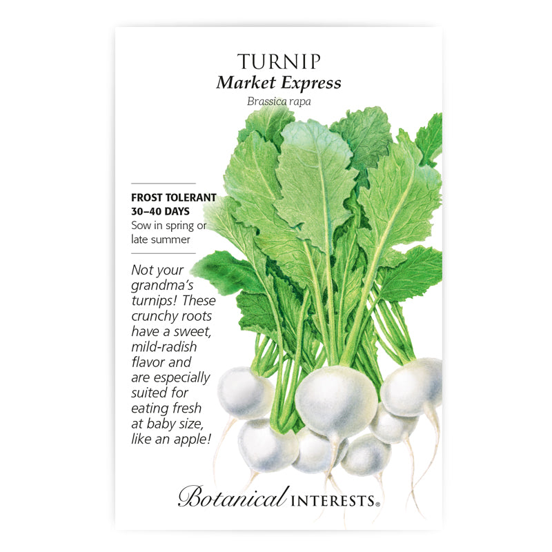 Turnip 'Market Express' Seeds