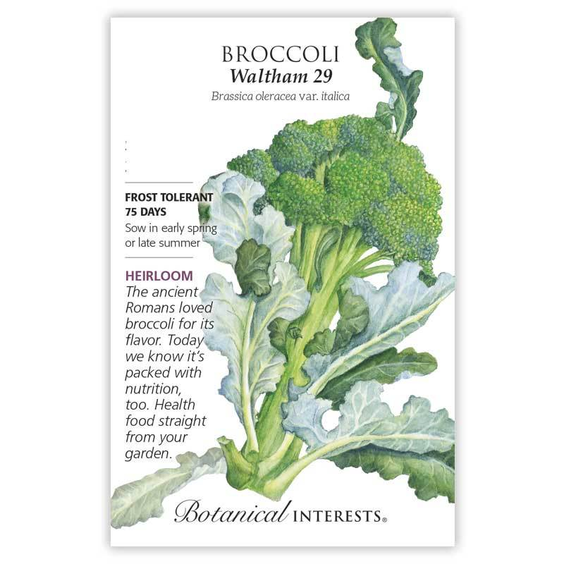 Broccoli 'Waltham 29' Seeds Heirloom