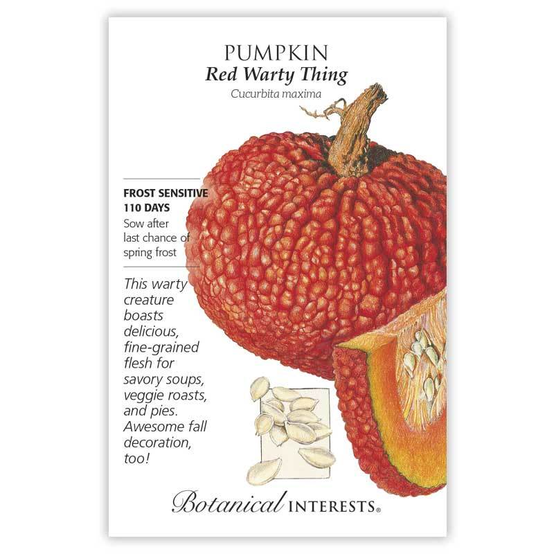 Pumpkin 'Red Warty Thing' Seeds