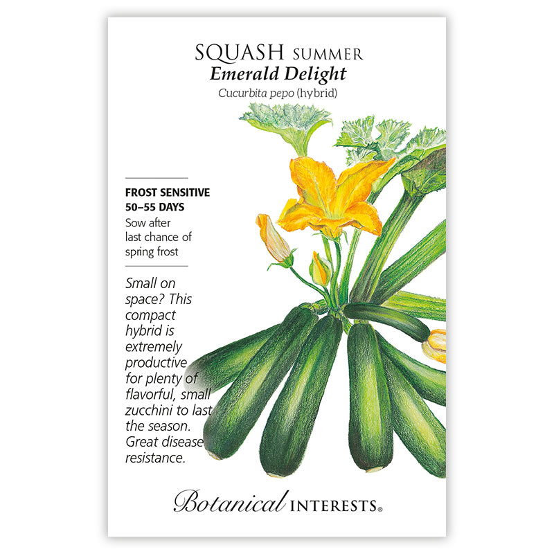 Squash Summer 'Emerald Delight' Seeds
