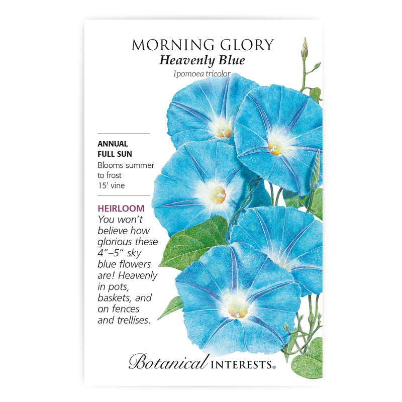 Morning Glory' Heavenly Blue' Seeds