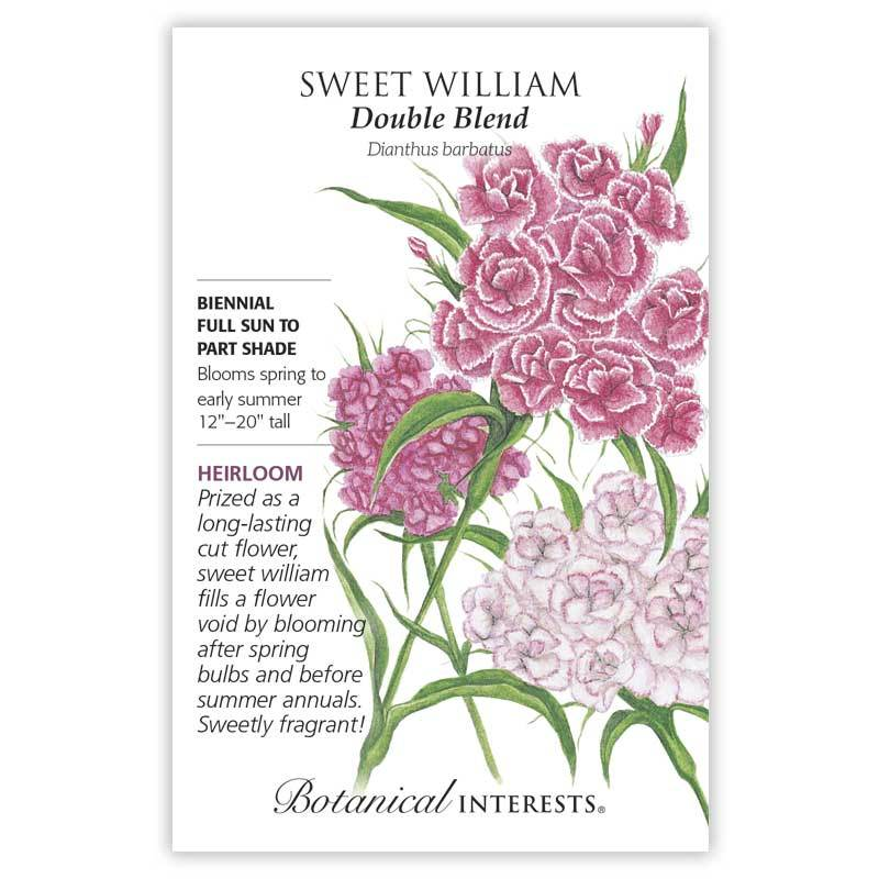 Sweet William 'Double Blend' Seeds
