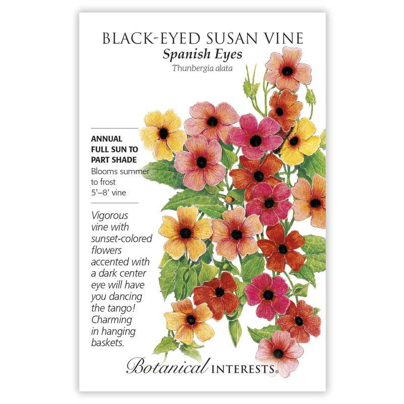 Black Eyed Susan Vine 'Spanish Eyes' Seeds