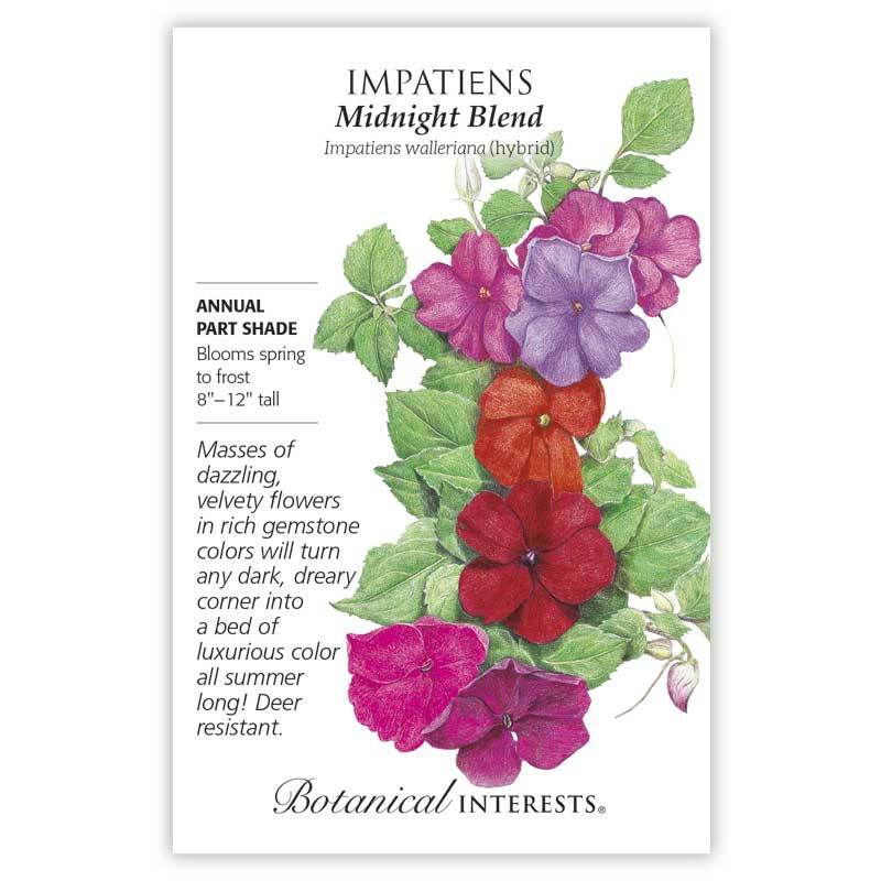 Impatiens 'Midnight Blend' Seeds