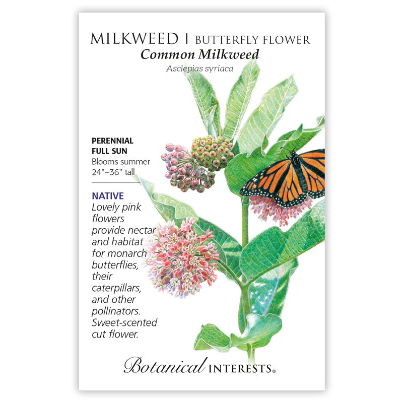 Milkweed/Butterfly Flower 'Common' Seeds