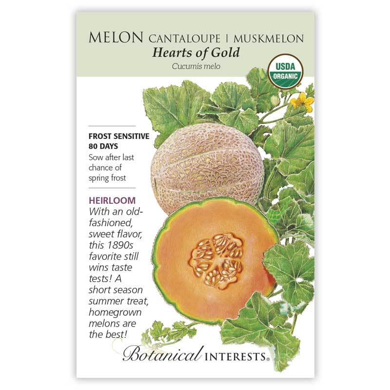 Melon Hearts of Gold Muskmelon Seeds Organic