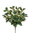 Variegated Holly Bush Vine