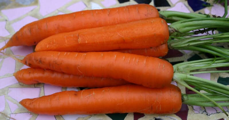 Carrot 'Danvers Half Long' Seeds