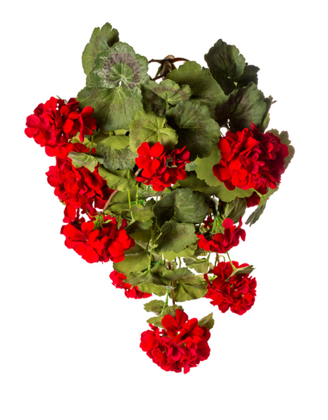 "26"" Hanging Red Geranium Silk Bush"