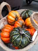 "4"" Flat Pumpkin Assorted Colors"