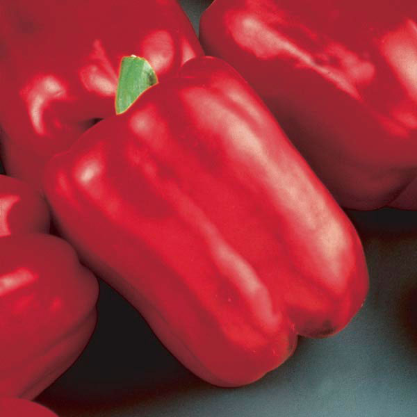Pepper - Chef Jeff 'Red Beauty' Bell Pepper