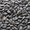 Sunflower Seed Black Oil