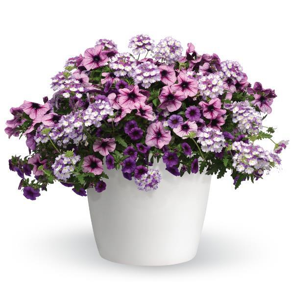 Starlight Starbright Hanging Basket