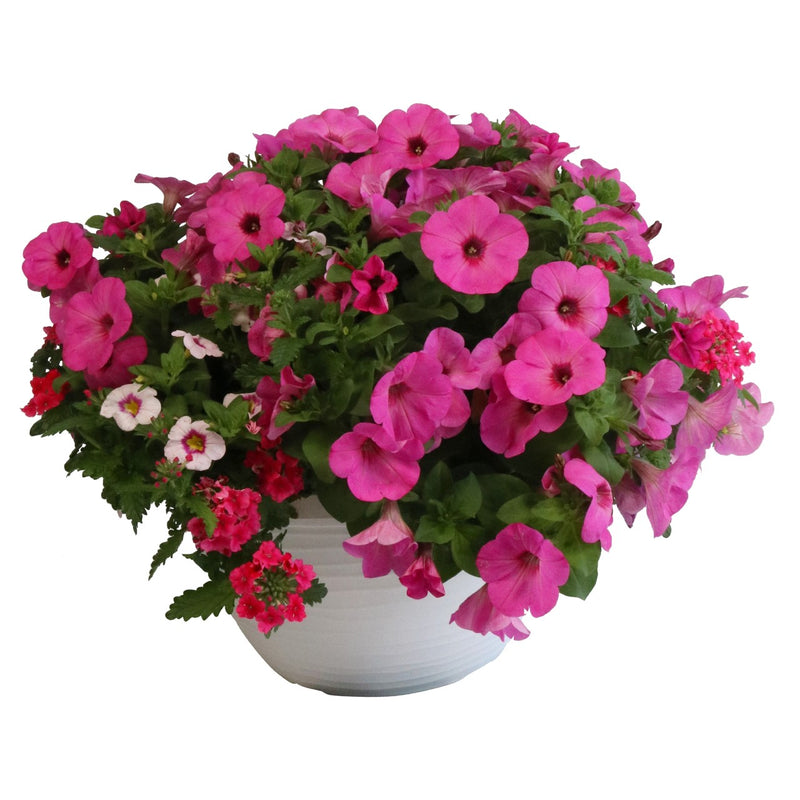 Super Mom Hanging Basket