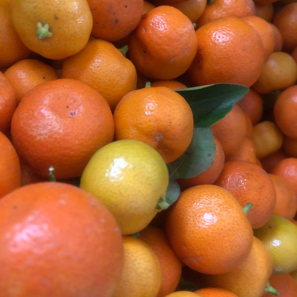 Citrus Season in full swing