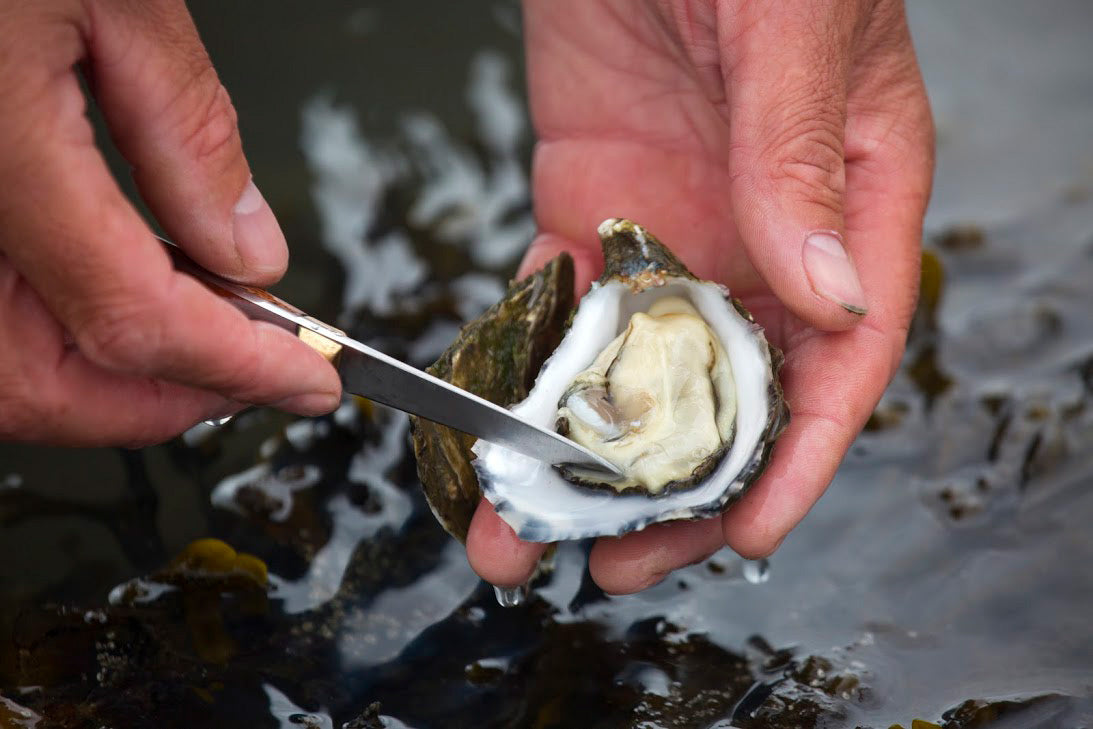 Boyne Valley Flavours - Carlingford Oysters
