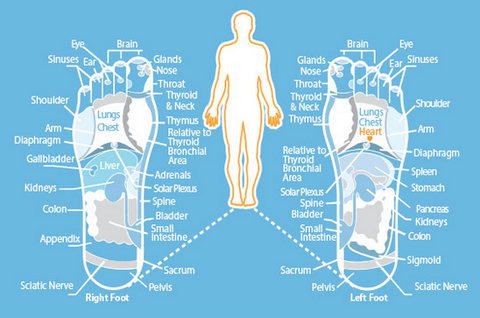 Reflexology Footmap