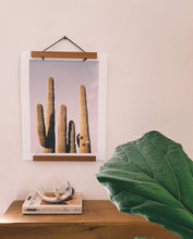Load image into Gallery viewer, SAGUARO SISTERS PRINT - ALBANY KATZ PHOTOGRAPHY