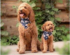 BANDANA PETS™ | Multicolor Bandana's Dogs | Animal scarf - FANTASY BIG STORE