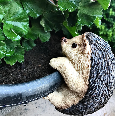 Hedgehog plant pot pal