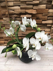 Ronde orchidee met pot