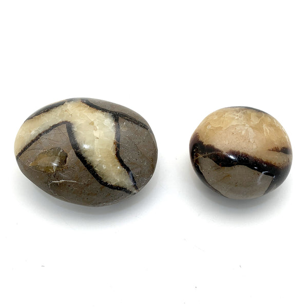 Septarian Palm Stone for public communication, confidence, shielding