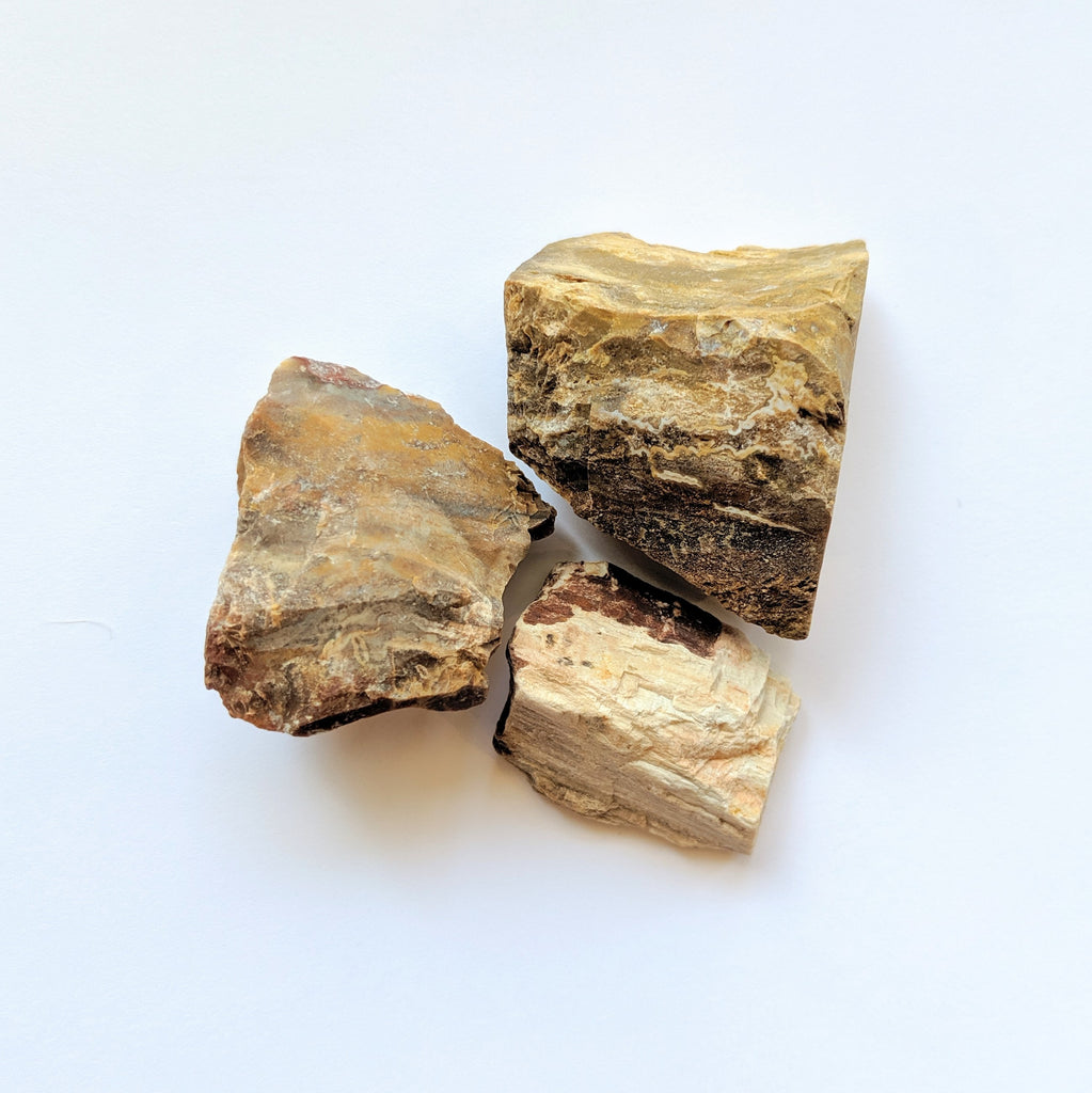 Petrified Wood for removing obstacles, business success - Body Mind & Soul