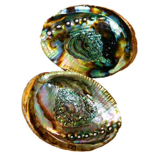 Abalone shells for smudging, beauty & harmony