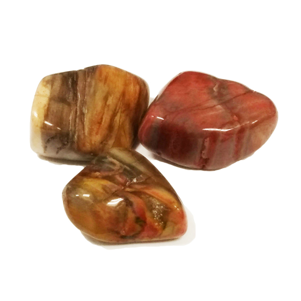 Petrified Wood Healing Crystal Texas Houston