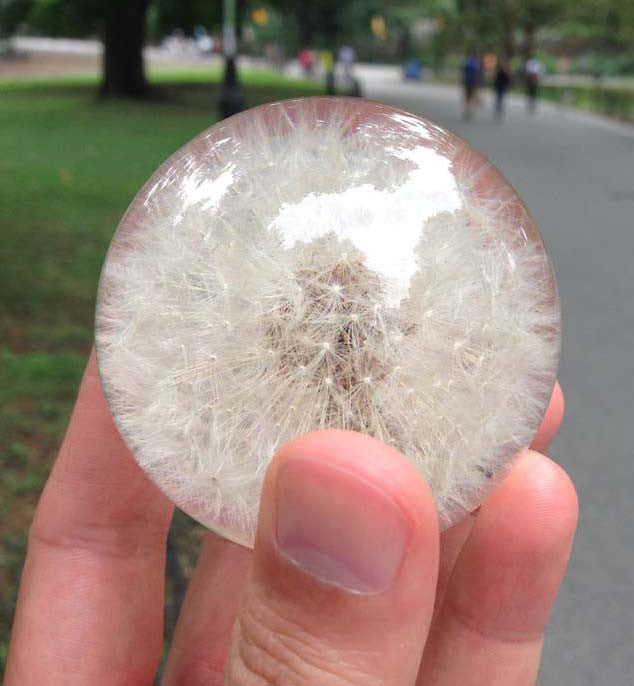 The Original Dandelion Paperweight