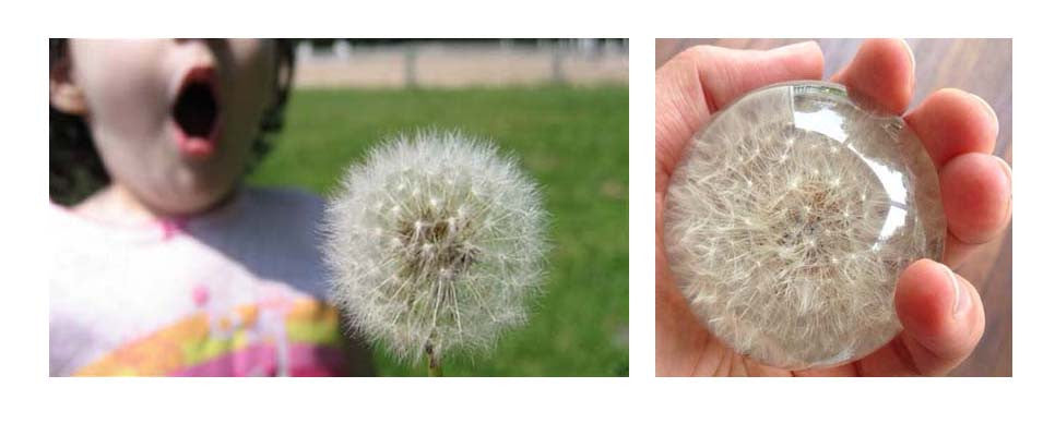Blowing on a dandelion