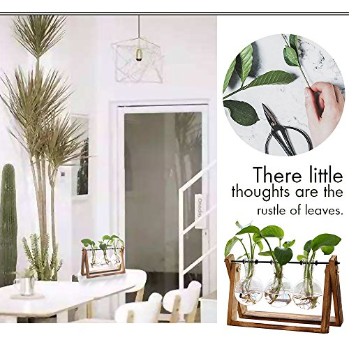 Plant Terrarium with Air Planter Bulb Glass Vase Metal Swivel - 3 Bulb Vase